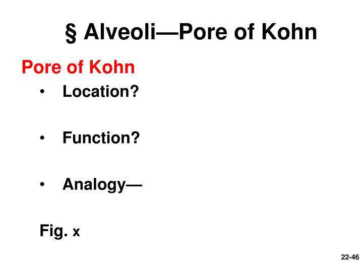 § Alveoli—Pore of Kohn