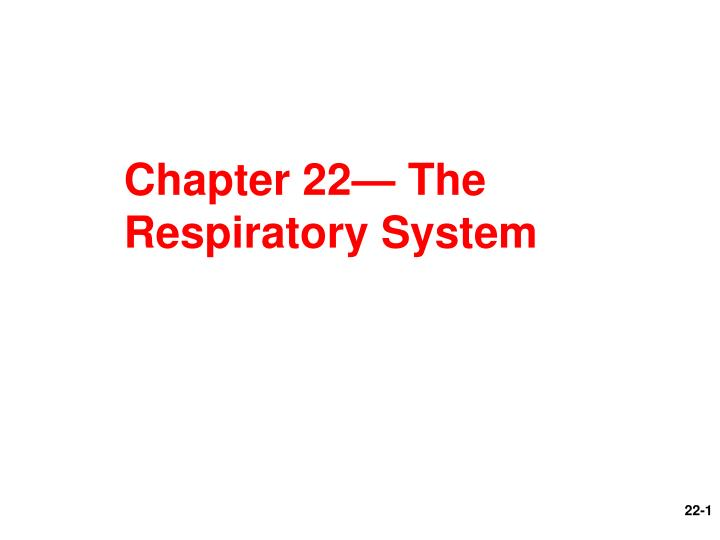 Chapter 22 the respiratory system