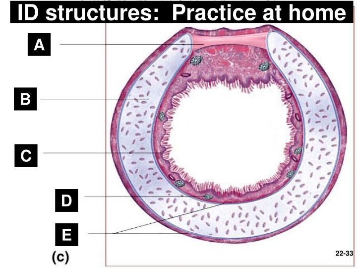 ID structures:  Practice at home
