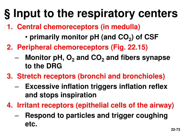 § Input to the respiratory centers
