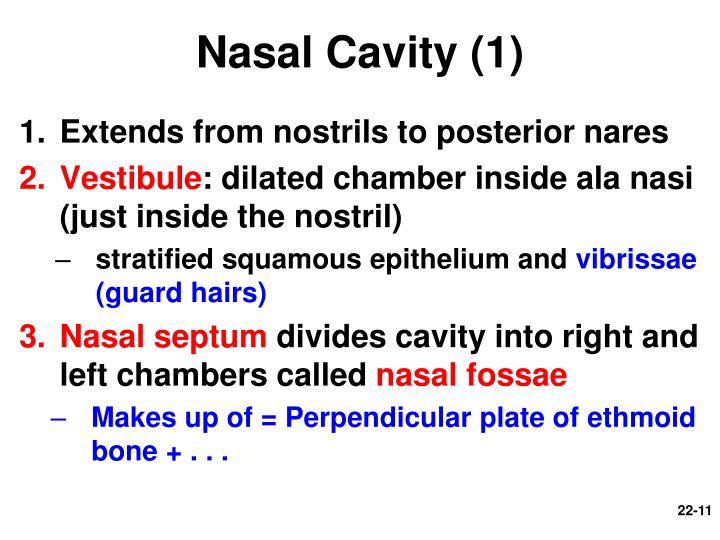 Nasal Cavity (1)