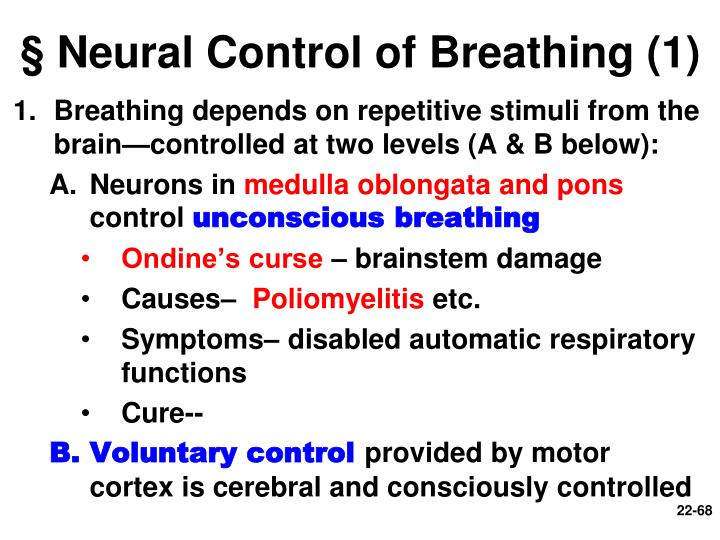 § Neural Control of Breathing (1)