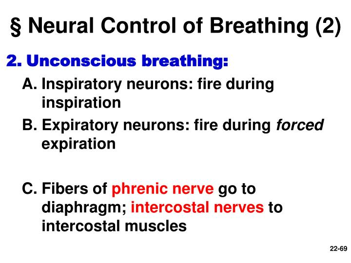 § Neural Control of Breathing (2)