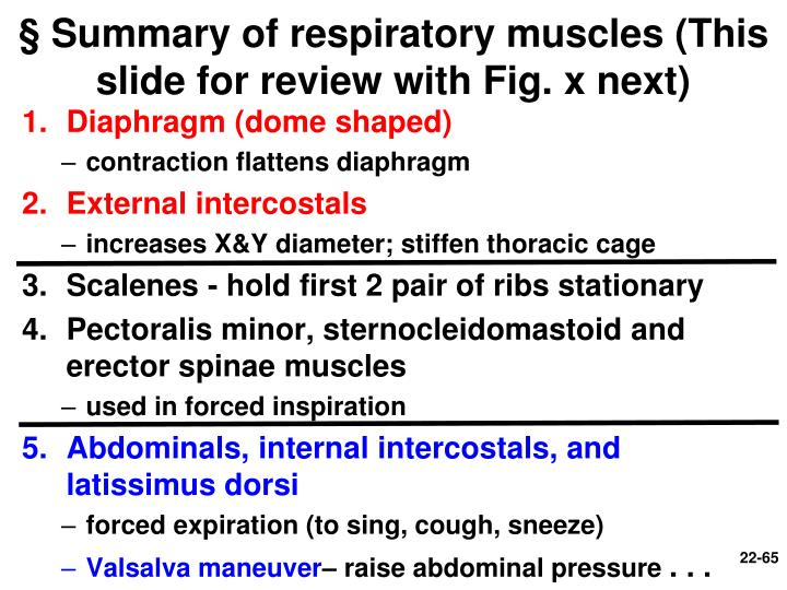 § Summary of respiratory muscles (This slide for review with Fig. x next)
