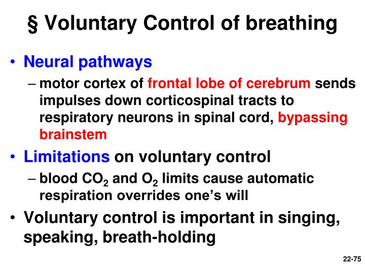 § Voluntary Control of breathing