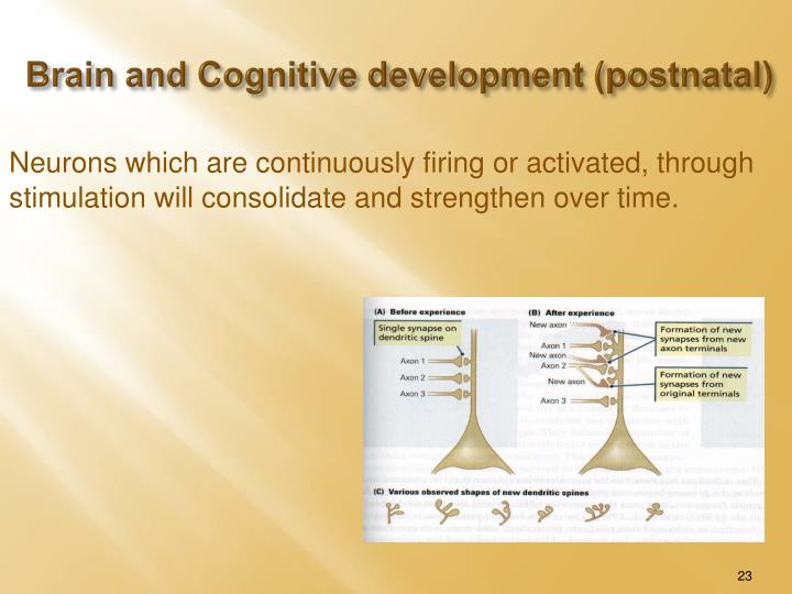 Brain and Cognitive development (postnatal)