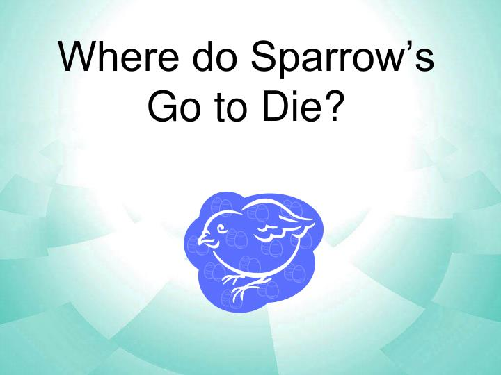 Where do Sparrow's Go to Die?