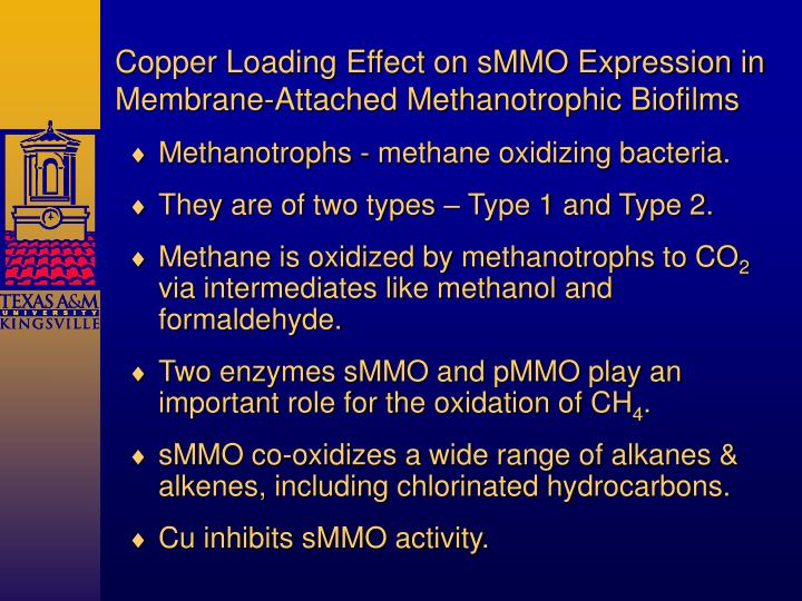 Copper Loading Effect on sMMO Expression in Membrane-Attached Methanotrophic Biofilms