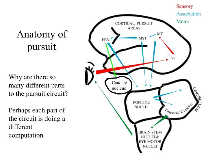Anatomy of pursuit