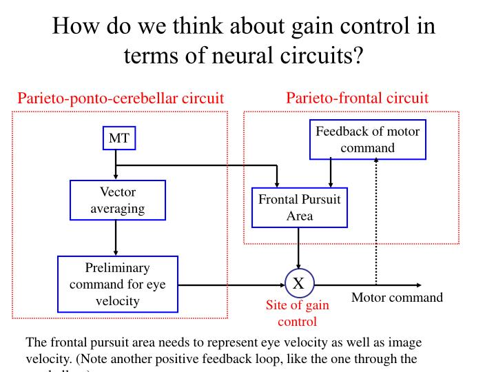 How do we think about gain control in terms of neural circuits?