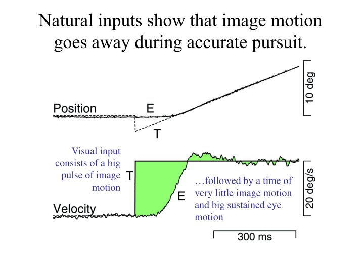 Natural inputs show that image motion goes away during accurate pursuit.
