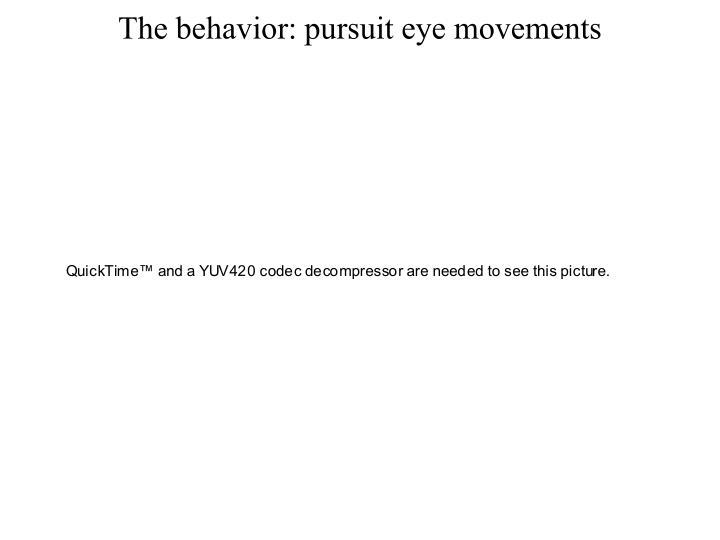 The behavior: pursuit eye movements