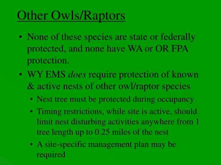 Other Owls/Raptors