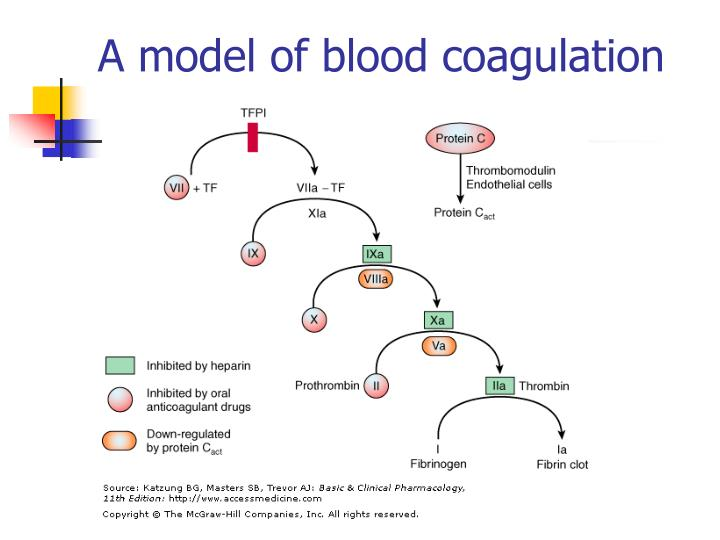 A model of blood coagulation