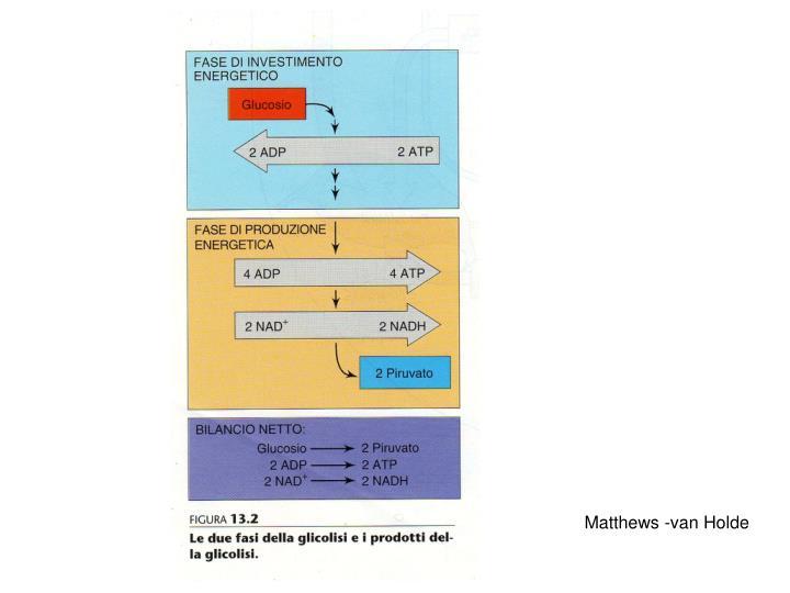 Matthews -van Holde