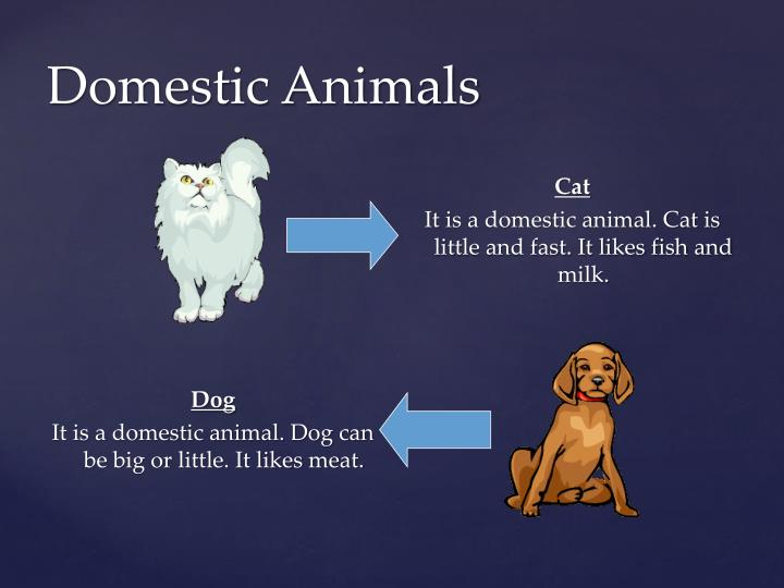Domestic animals