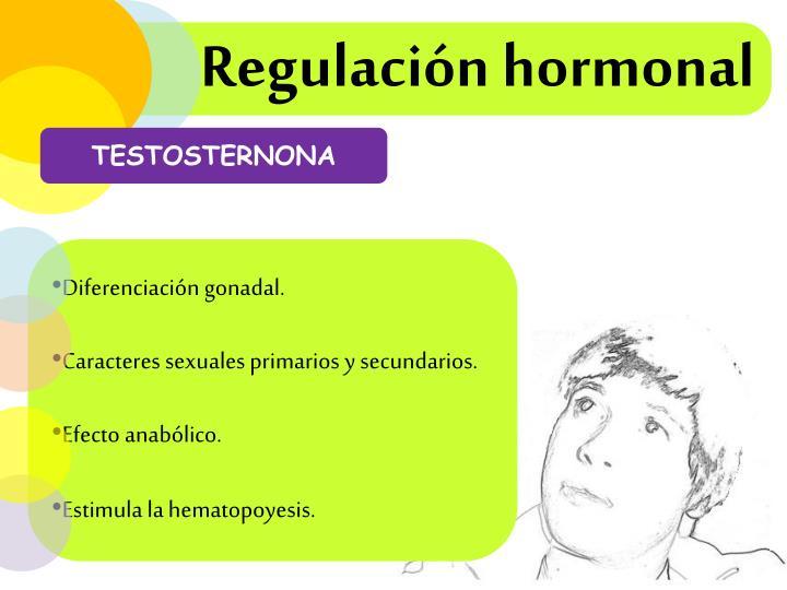 Regulación hormonal