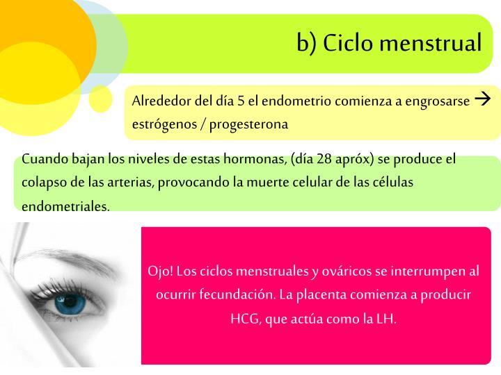 b) Ciclo menstrual
