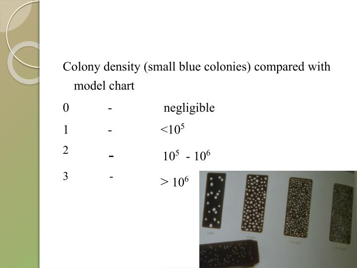 Colony density (small blue colonies) compared with model chart