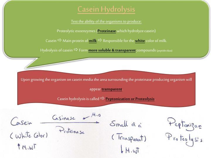 Casein Hydrolysis