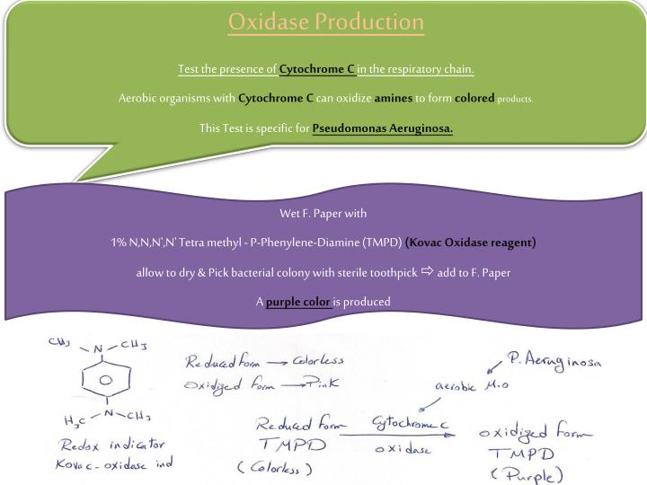 Oxidase