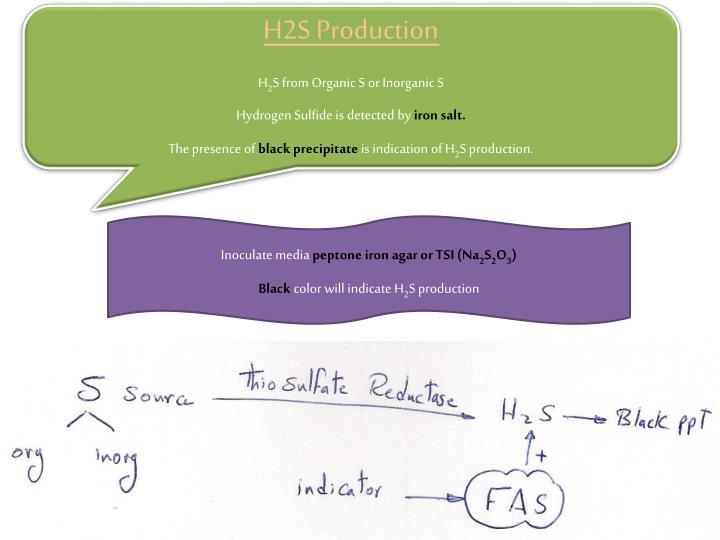 H2S Production