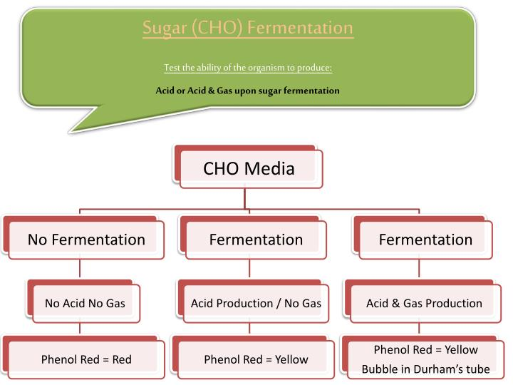 Sugar (CHO) Fermentation