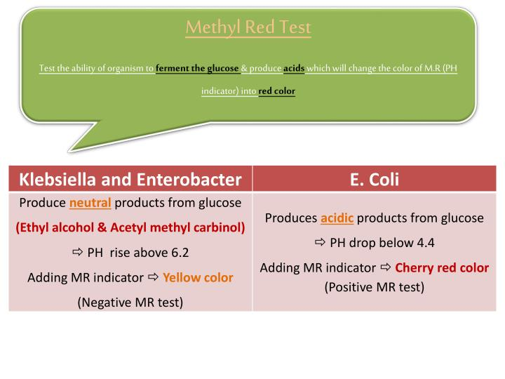 Methyl Red Test