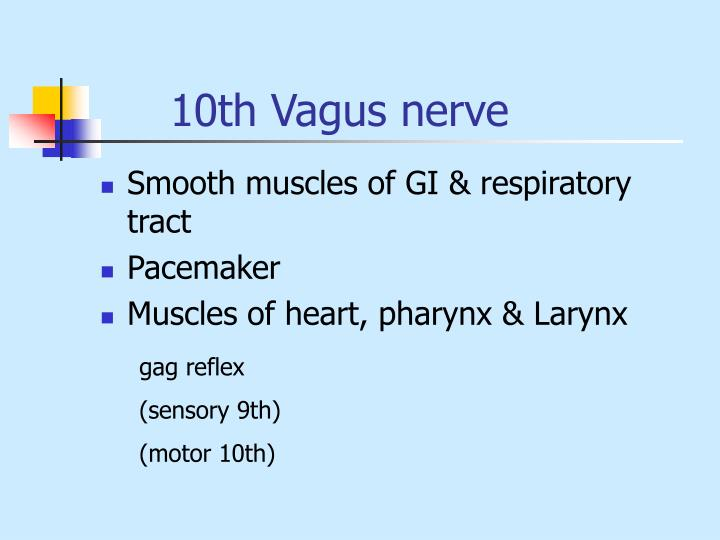 10th Vagus nerve