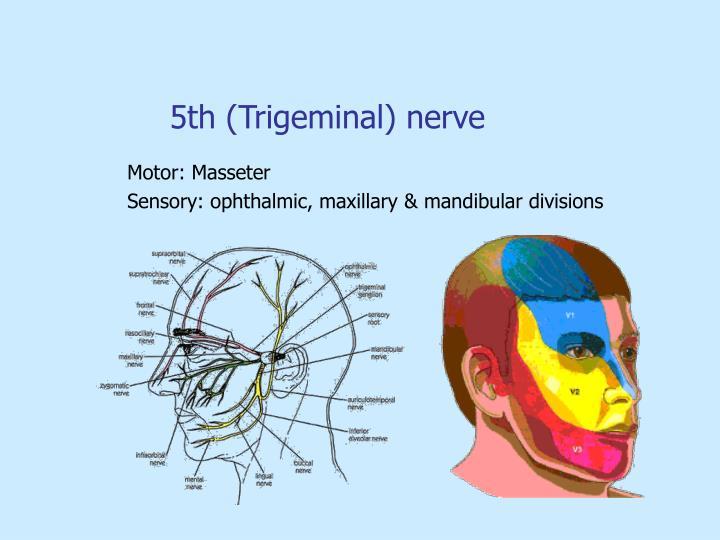5th (Trigeminal) nerve