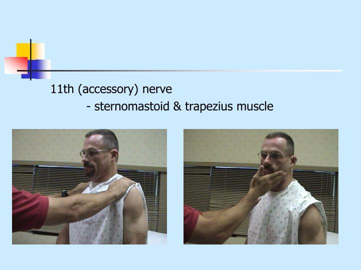 11th (accessory) nerve
