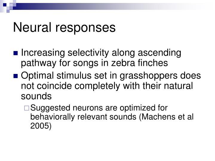 Neural responses