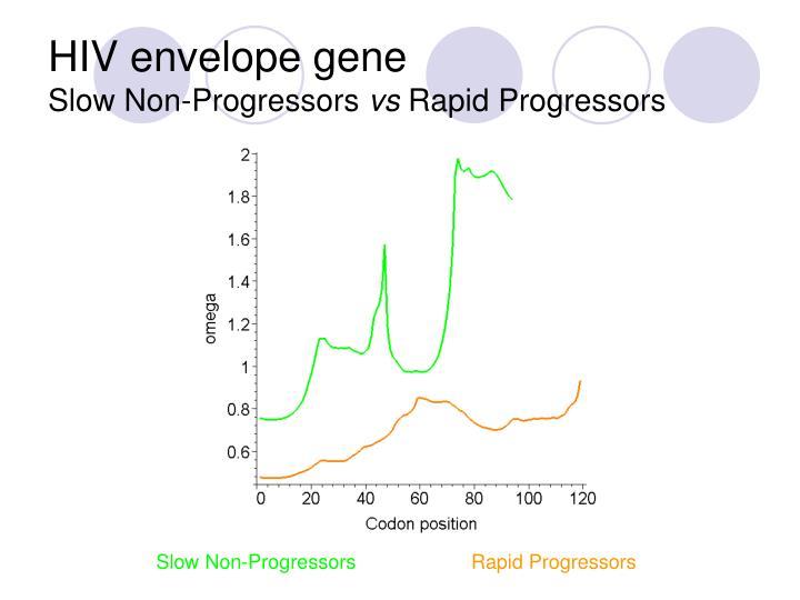 HIV envelope gene