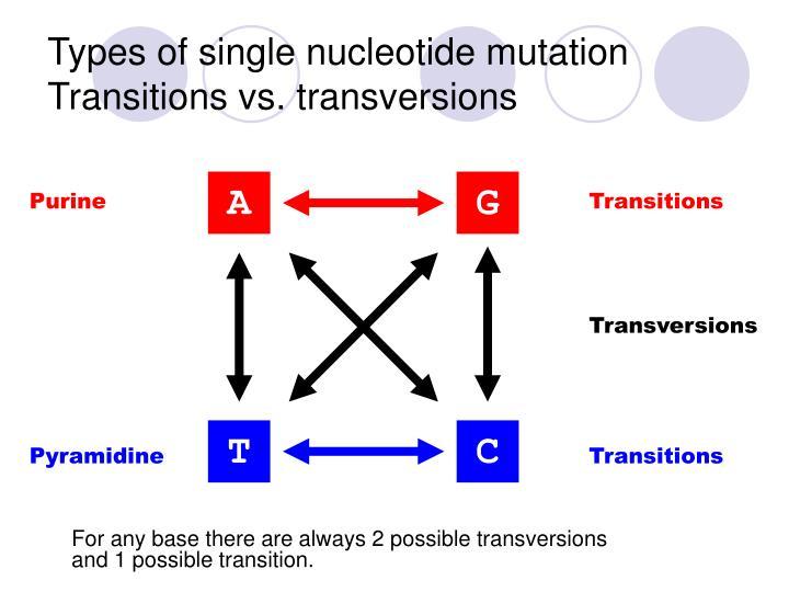 Types of single nucleotide mutation