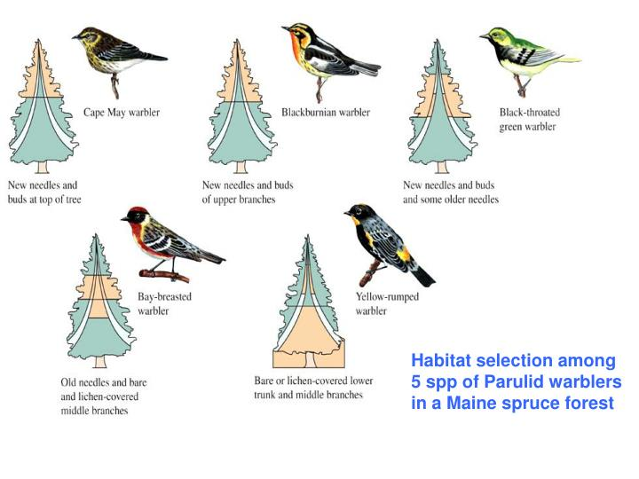 Habitat selection among