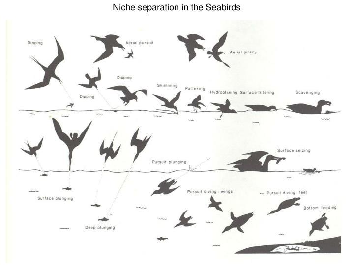 Niche separation in the Seabirds