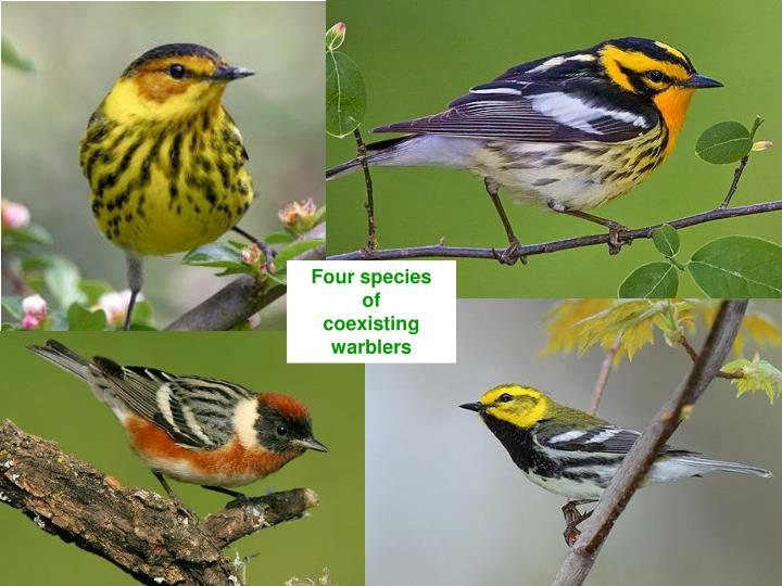 Four species