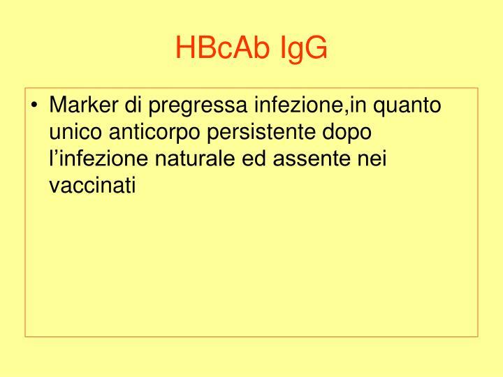 HBcAb IgG