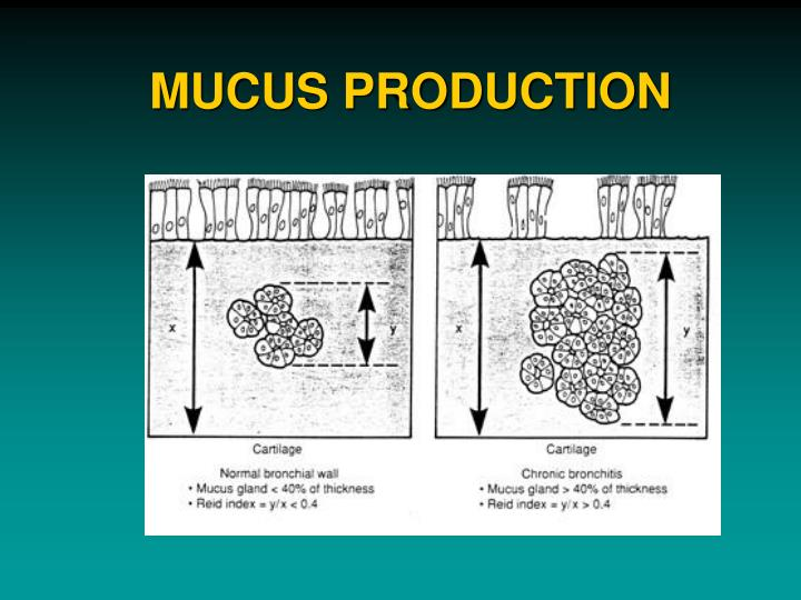 MUCUS PRODUCTION