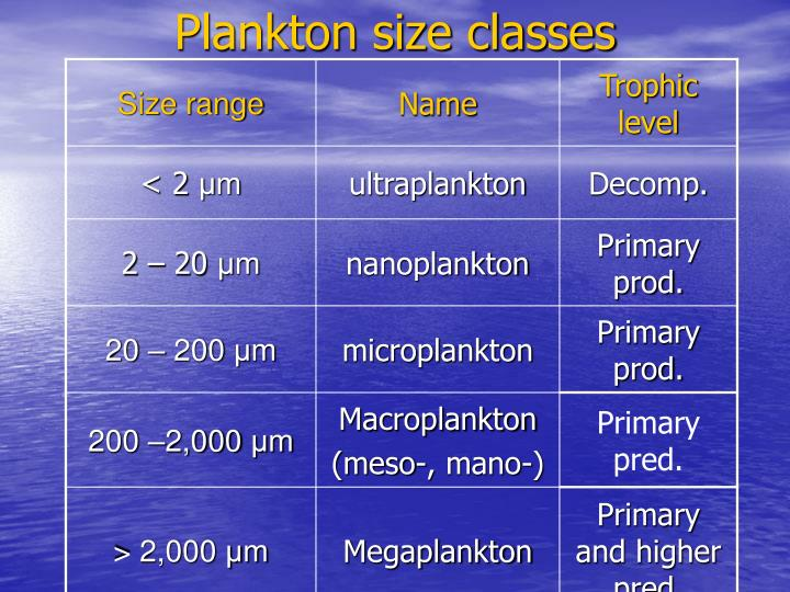 Plankton size classes