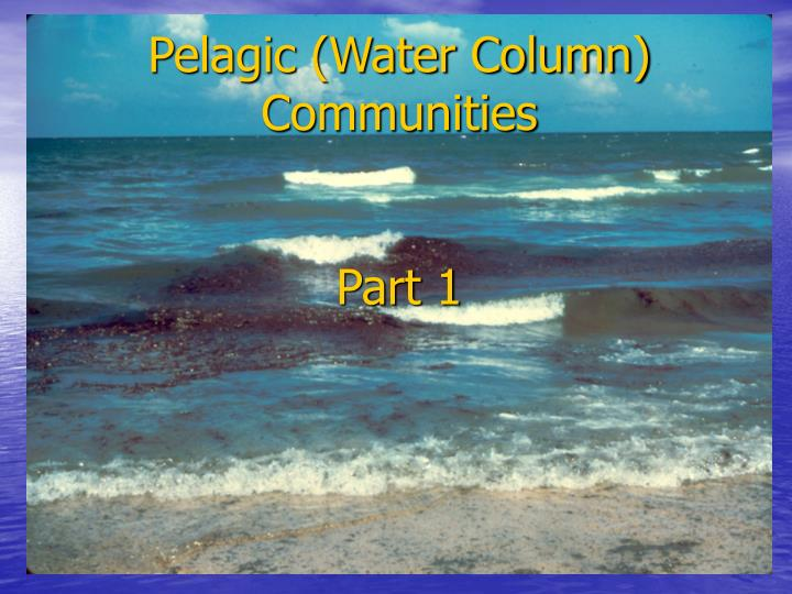 Pelagic (Water Column) Communities