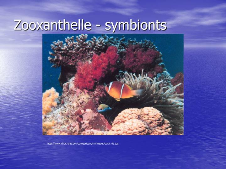 Zooxanthelle