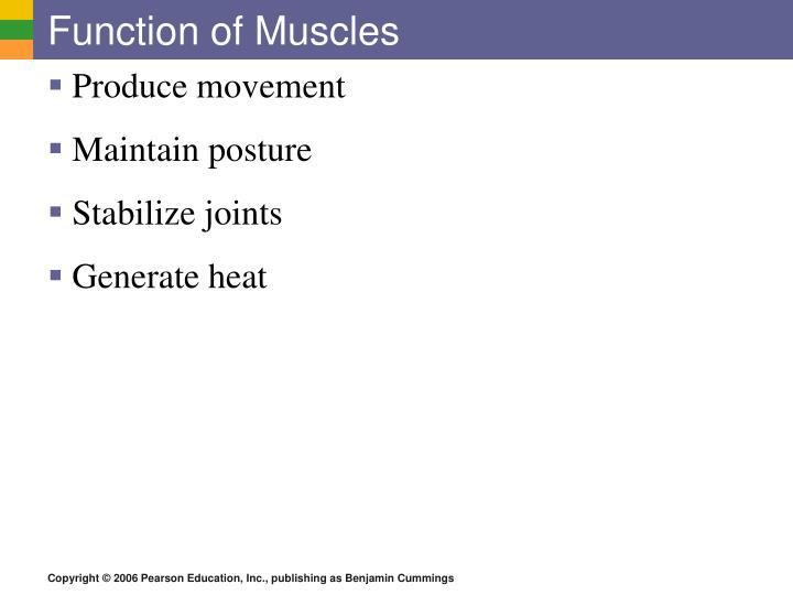 Function of Muscles