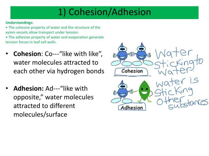 1) Cohesion/Adhesion