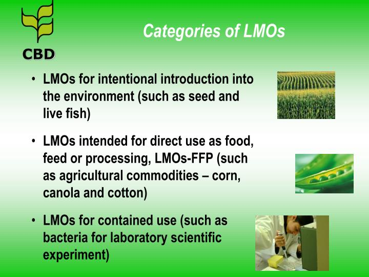 Categories of LMOs