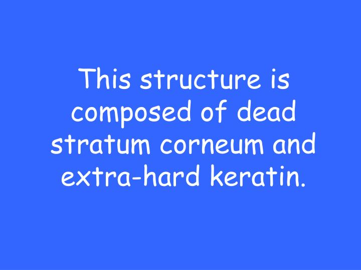 This structure is composed of dead stratum corneum and extra-hard keratin.
