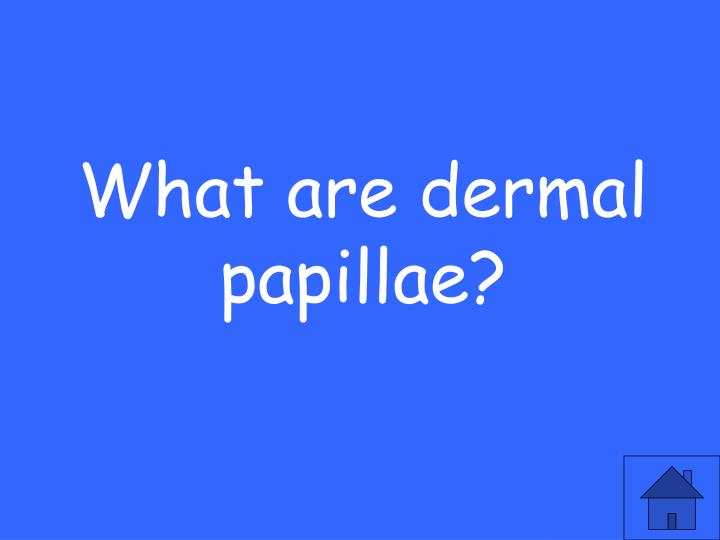 What are dermal papillae?