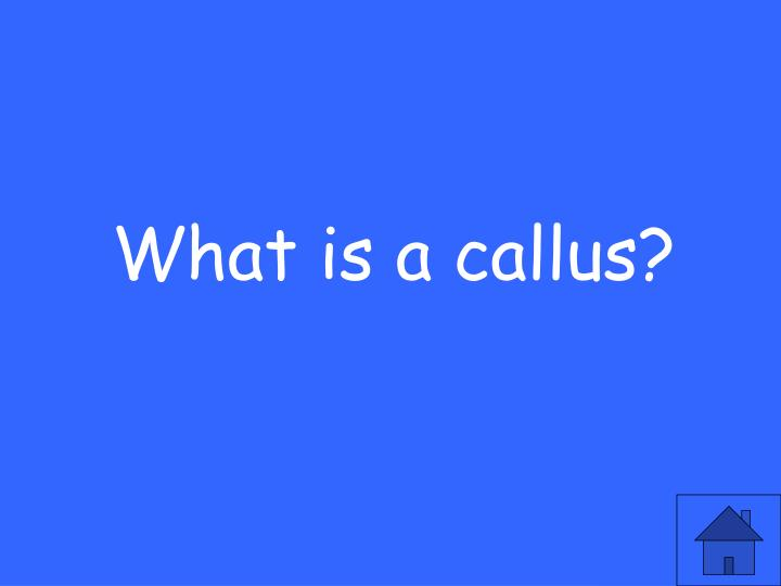 What is a callus?