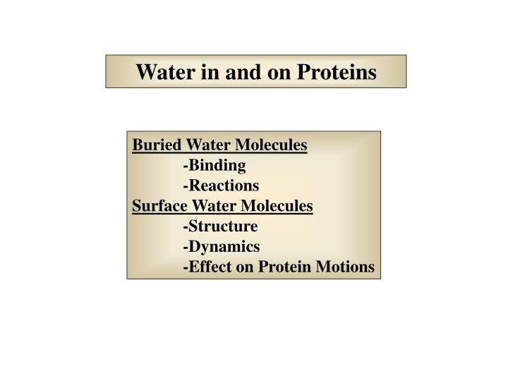 Water in and on Proteins