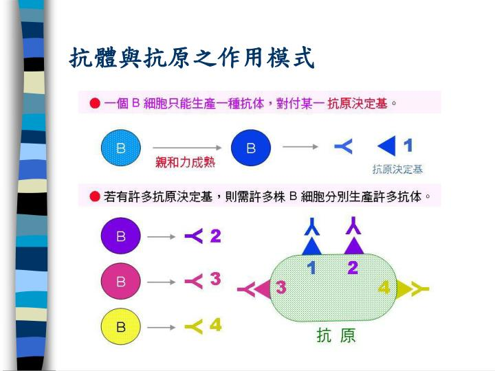 抗體與抗原之作用模式